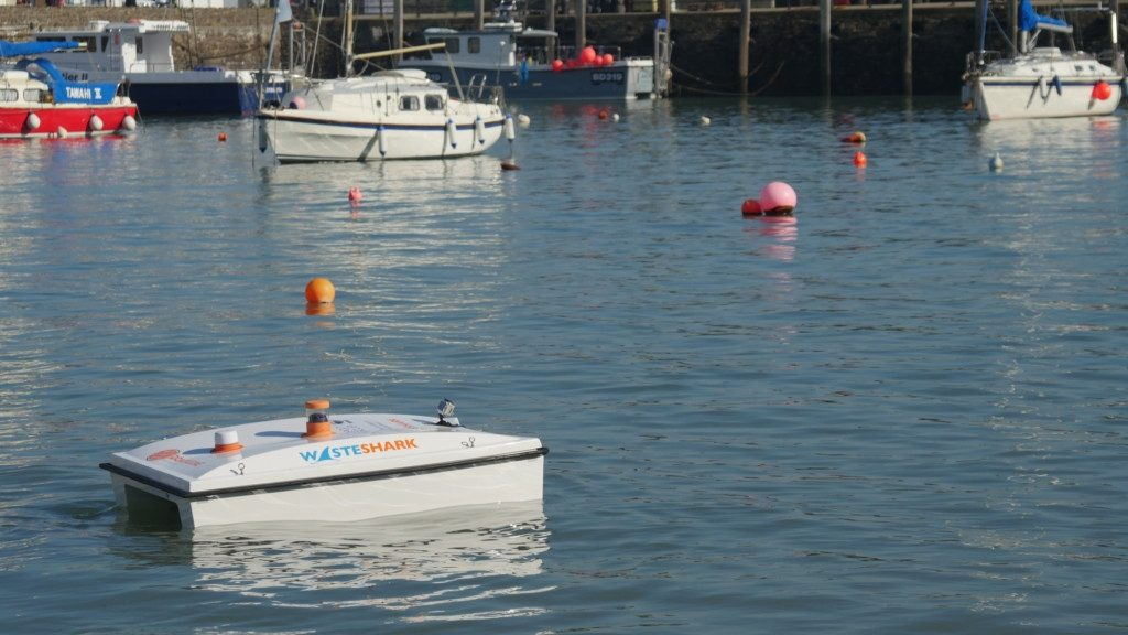 Shark spotted in Devon harbour