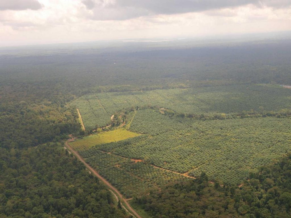 Palm oil sites return to being protected rainforest