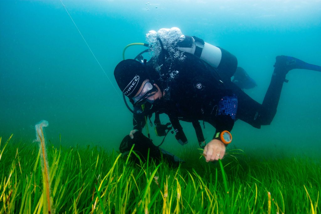 Seagrass project to help restore ocean health