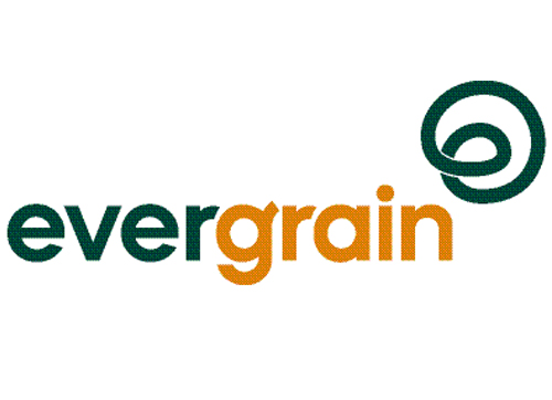 ABI Evergrain A